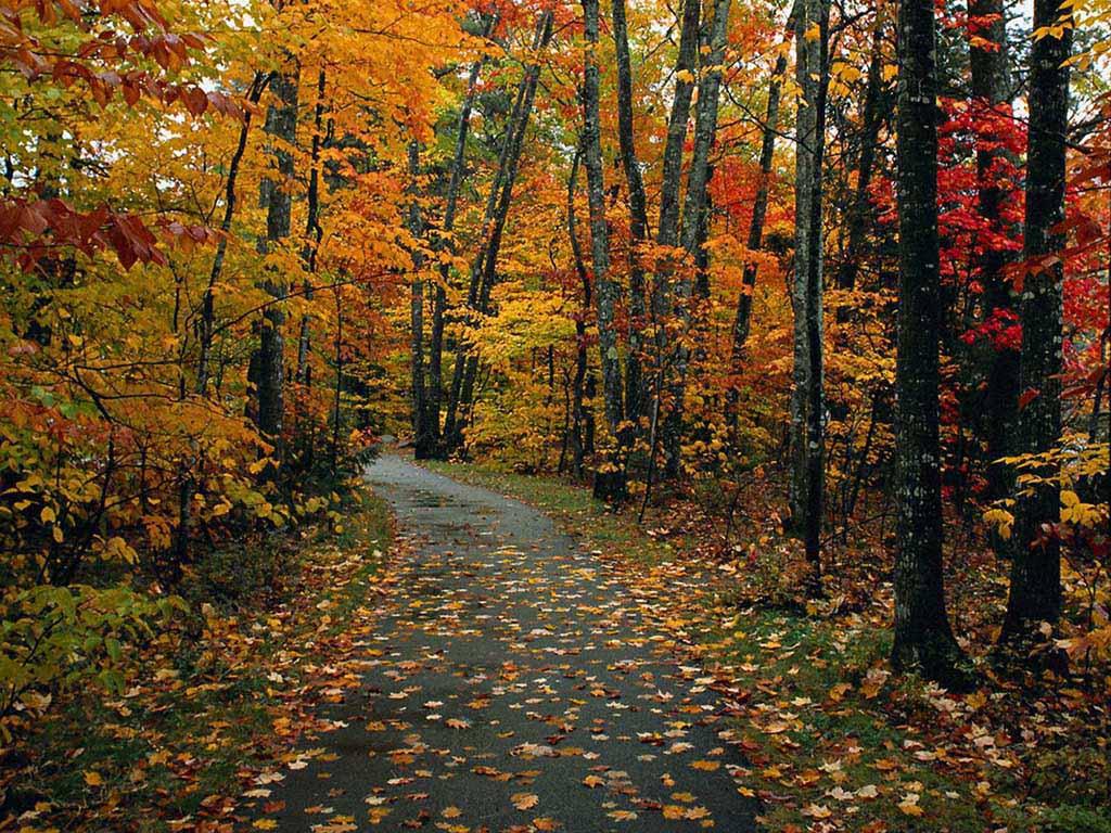 Superbes couleurs d'automne... dans Belles images g5aiz0qe